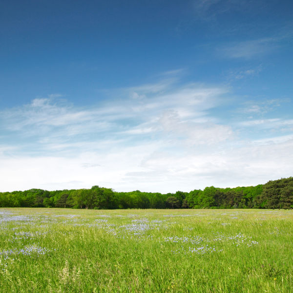 Picture of Modern Land Trusts in Estate Planning