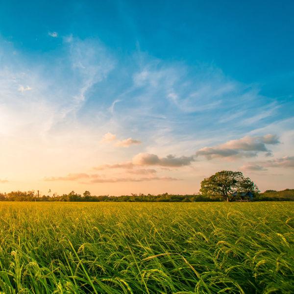 Picture of Illinois EPA Bureau of Land Update